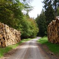 Weg zum Wurzelberg